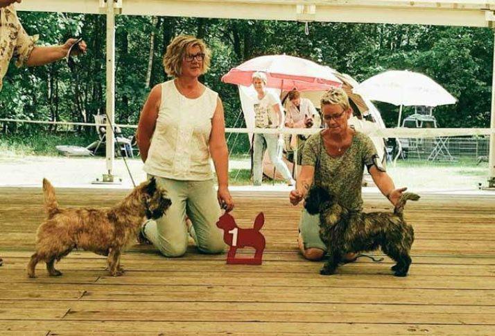 Jonge Honden en Veteranen Dag