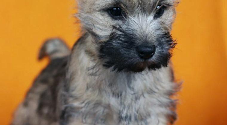 Puppy Pien