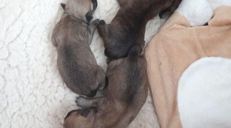 Puppy's geboren!